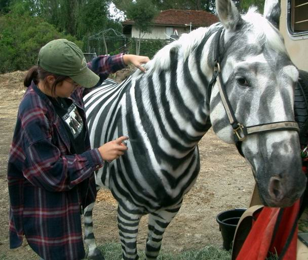 zebra-do-it-yourself-spray.jpg
